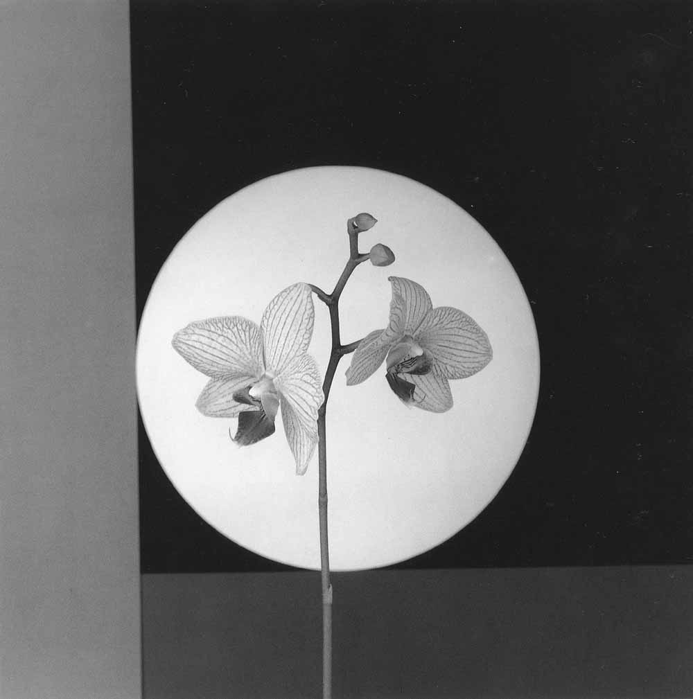Robert Mapplethorpe, Orchids 1988