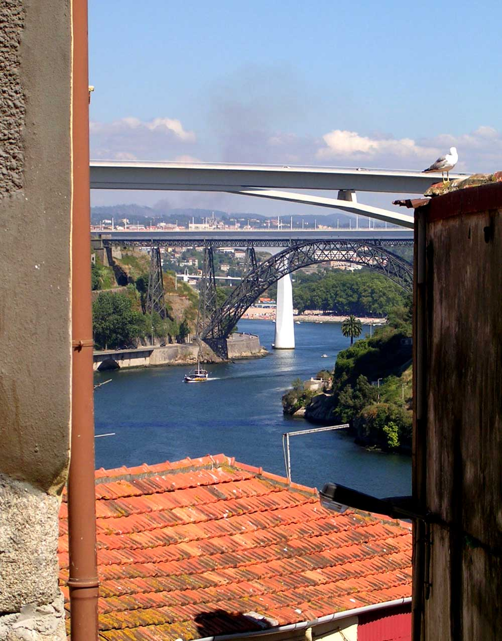 Il gabbiano e i ponti